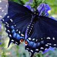 Butterfly2021