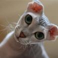 levka-cat