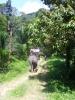 Экскурсия на слонах (Таиланд)