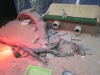 """Ручной зоопарк (Смоленск, ул. 25 Сентября, д. 35а, ТРЦ  """"Макси"""")"""