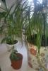 Разведение комнатных растений