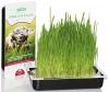 Трава для кошек Titbit Лакомый кусочек