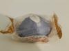 """Трюфели """"Победа вкуса"""" с марципаном и тертым грецким орехом"""
