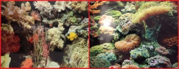 Двусторонний фон для аквариума Marina ClearView #11778