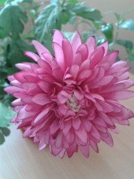 "Искусственный цветок ""Астра М"" арт. Д-207"