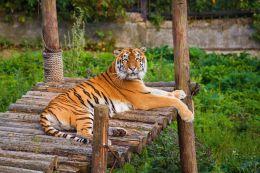 Калининградский зоопарк (Калининград, пр-т Мира, 26)