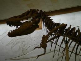 Палеонтологический музей им. Ю.А.Орлова (Москва, ул. Профсоюзная, д. 123)