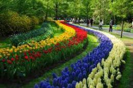 Парк цветов Кекенхоф (Лиссе, Нидерланды)