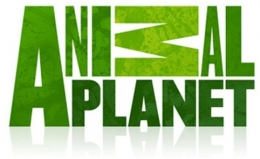 Телеканал Animal Planet