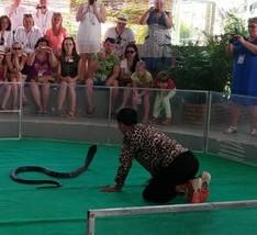 Змеиное шоу в Нячанге (Вьетнам)