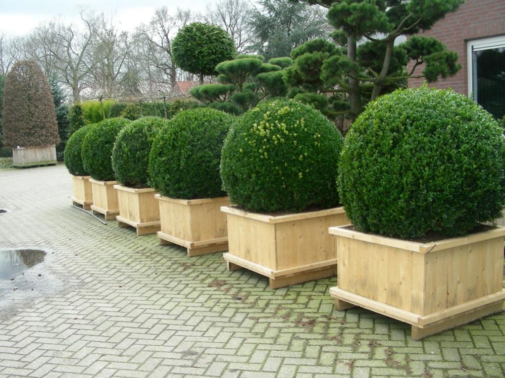 стендап вечнозеленые садовые растения фото и названия тщательно оберегает