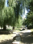 Ивы рядом с речкой Салгир