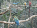 Коулун парк в Гонконге - специальная сетка для птиц