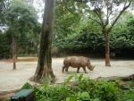 Зоопарк Singapore Zoo в Сингапуре - носорог