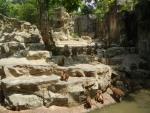 Зоопарк Singapore Zoo в Сингапуре - обезьяны