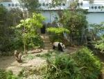 Зоопарк Singapore Zoo в Сингапуре - панда