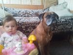 наш боксер и дочка
