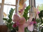 роскошные цветки