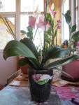 для орхидеи нужен подходящий горшок