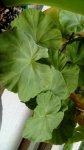 листья в банке