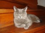 кошка Элис на лестнице