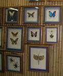 экспозиция бабочек под стеклом