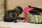 умные котята должны знать, где их уголок