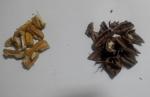 орехи и скарлупки