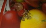 виноградина с косточками
