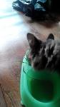 кошка ест травку