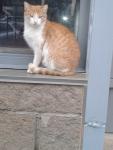 рыженькая кошка