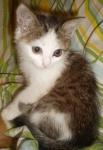 зеленый котенок