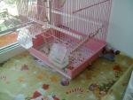 волнистые попугаи клетка и мусор вокруг