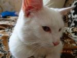 Мой альбинос.