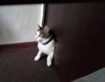 очень любознательный кот