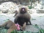 Мы много зоопарков посещали - но этот лучший!