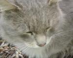 спит кошка глаза