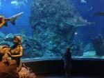 один из огромных аквариумов