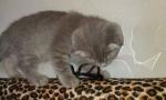 котенок нашей кошки))