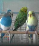 А это наши Маргошка, Гошка  и Малявка