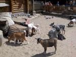 Козы с козлятами