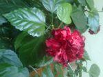 Новый распустившийся вчера цветок