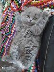 Котенок Моня