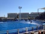 Шоу дельфинов в океанариуме L'Oceanogràfic (Валенсия)
