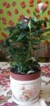 Керамическое кашпо с поддоном Дайнемик с розой внутри