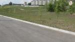 Набережная Комсомольского района (Тольятти, Комсомольский район)  - посаженные вдоль набережной деревья