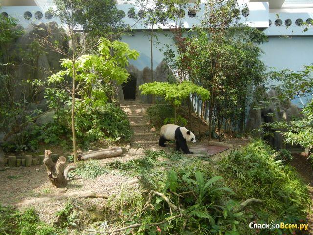 Зоопарк Singapore Zoo в Сингапуре фото