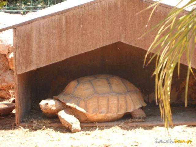 """Зоопарк """"Pafos ZOO"""" (Кипр, Пафос) фото"""