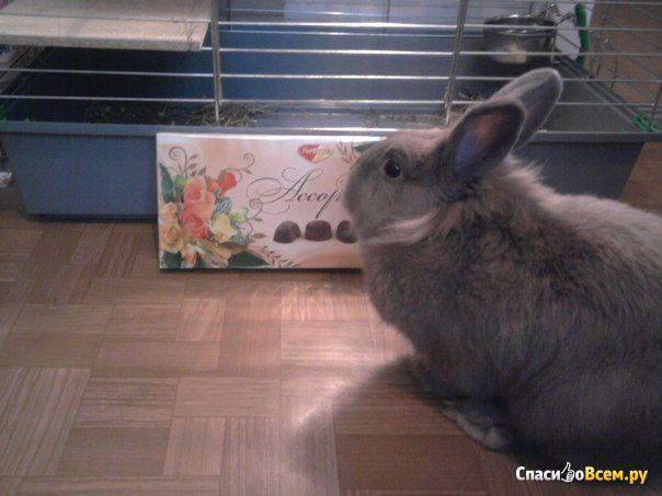 """Декоративный кролик породы """"Львиная головка"""""""