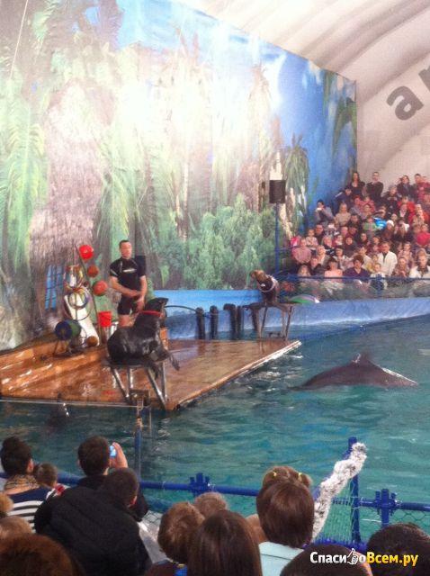 "Дельфинарий ""Северное сияние"" (Екатеринбург, ул. Академика Шварца, д. 17) фото"